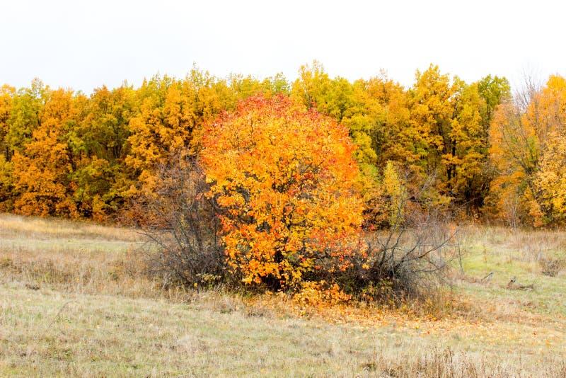 Лес осени в после полудня стоковое фото