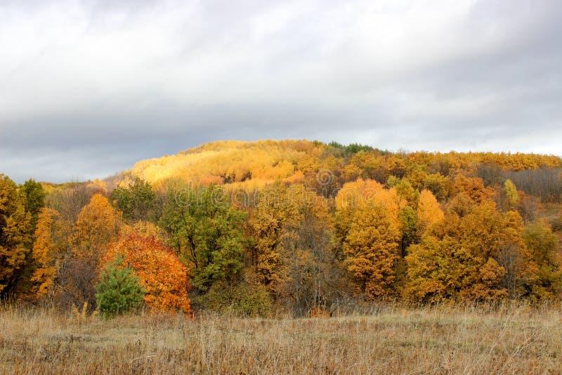 Лес осени в после полудня стоковая фотография
