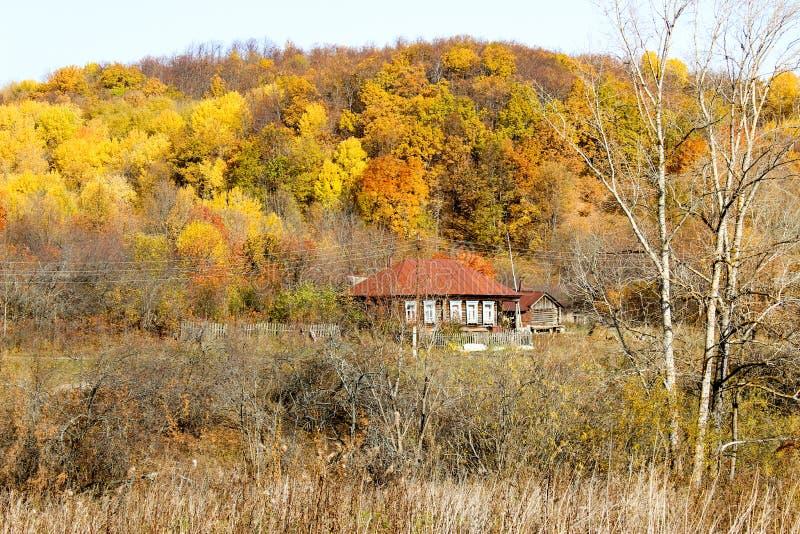 Лес осени в после полудня стоковая фотография rf