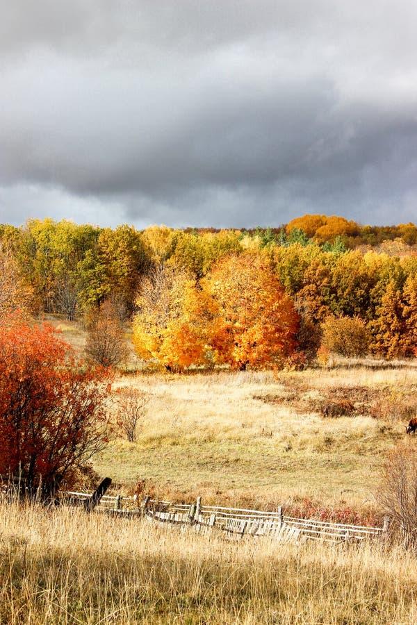 Лес осени в после полудня стоковые изображения