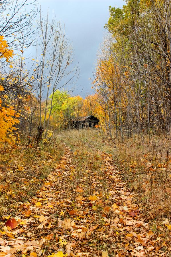 Лес осени в после полудня стоковое изображение