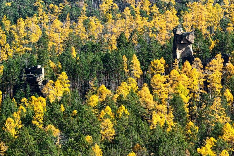 Лес осени в Сибире стоковая фотография rf