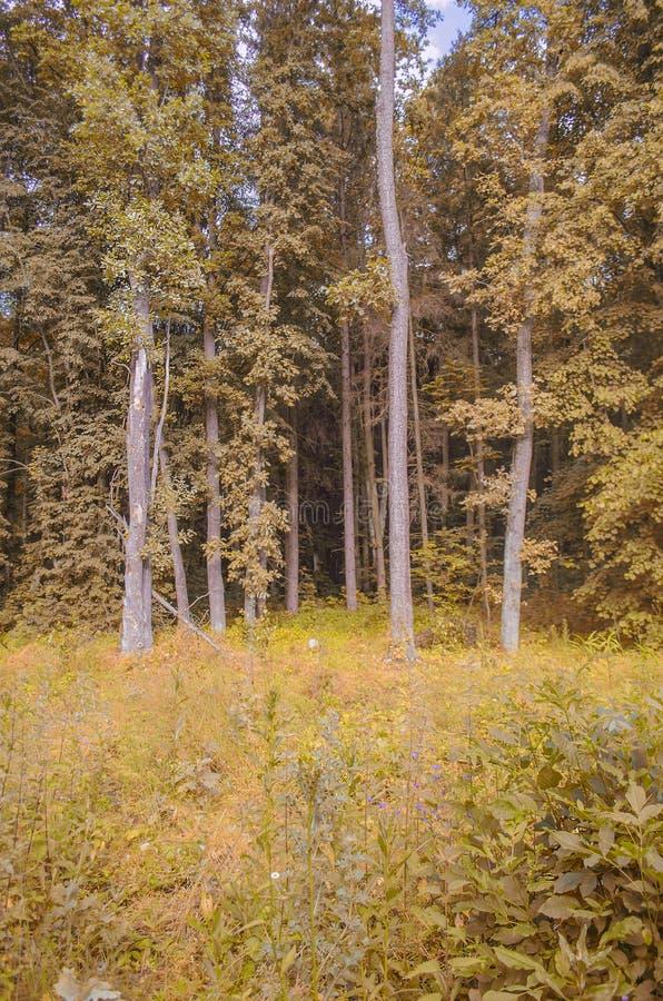Лес осени золота стоковое изображение