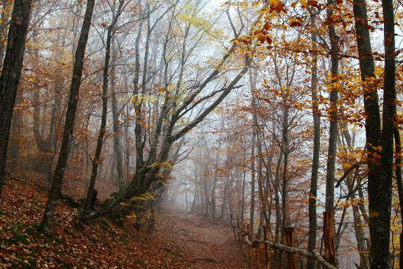 Лес осени положенный в кожух в след леса тумана стоковые фотографии rf