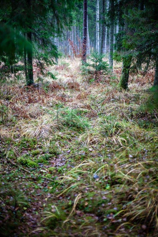 лес осени после дождя с влажной листвой и малой глубиной стоковая фотография