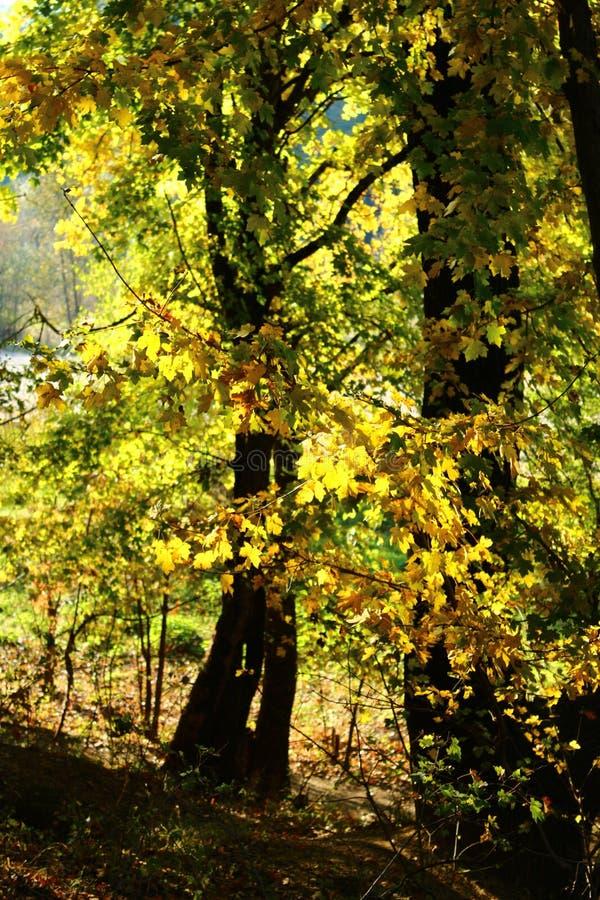 Лес осени, древесина осени стоковые фотографии rf