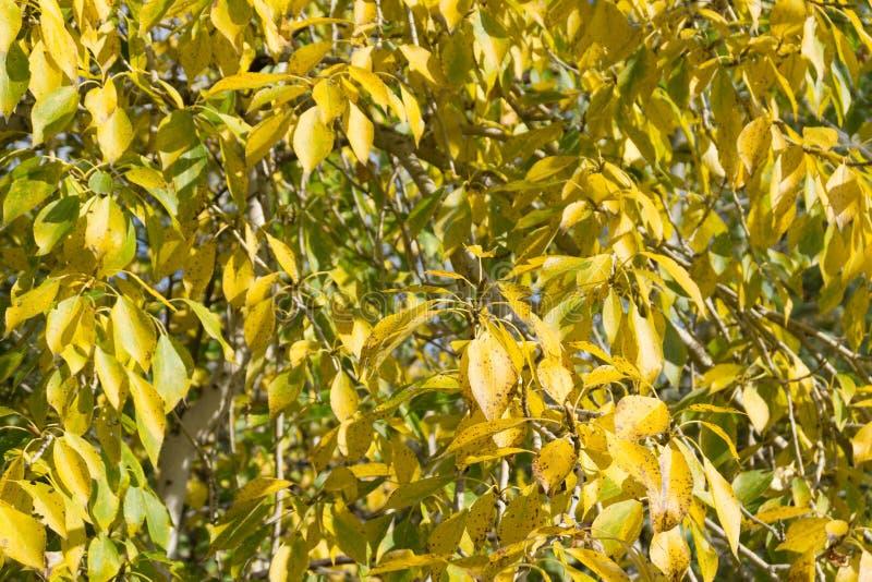 Лес осени с желтыми деревьями на солнечном дне Красивейший ландшафт стоковые фотографии rf