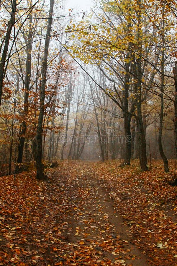 Лес осени с проселочной дорогой Изумляя лес с живой листвой в тумане стоковое фото rf