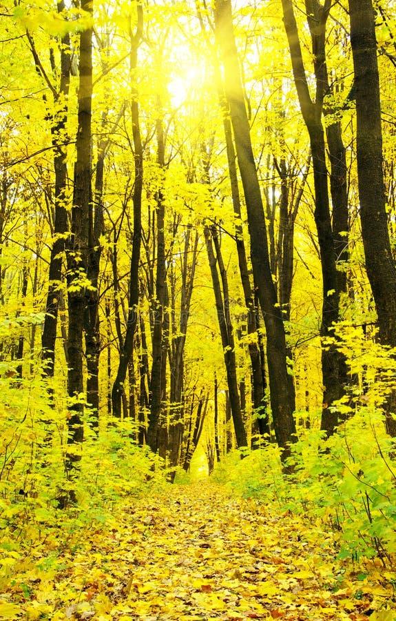 Download Лес осени стоковое фото. изображение насчитывающей листья - 33729168