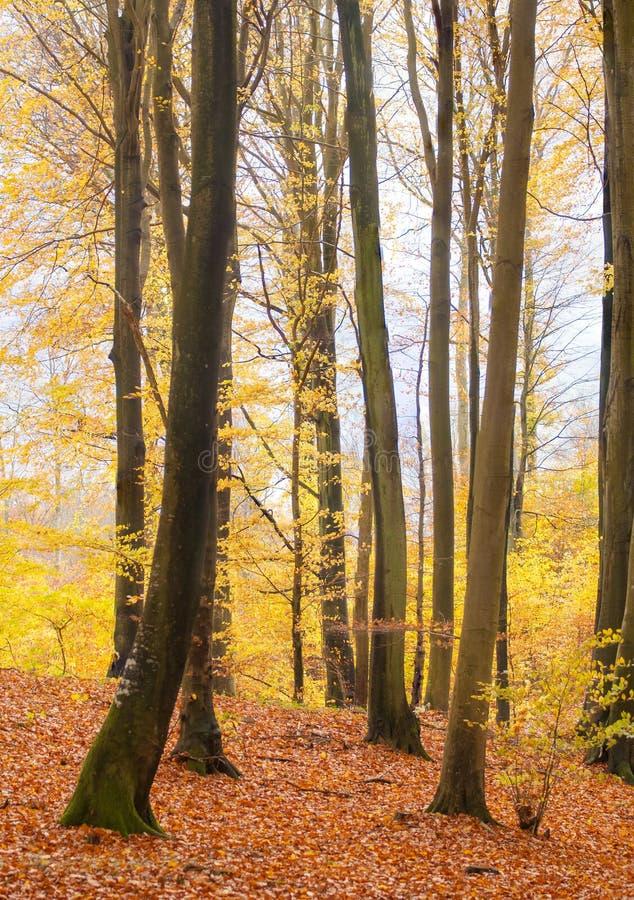 Лес осени стоковое изображение rf