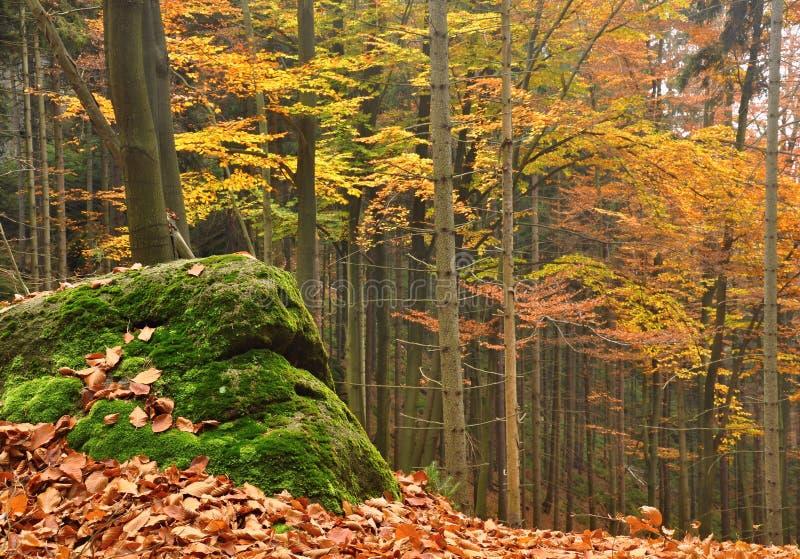 Лес осени стоковая фотография