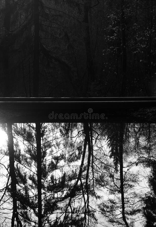 Лес отражен в воде озера стоковые изображения
