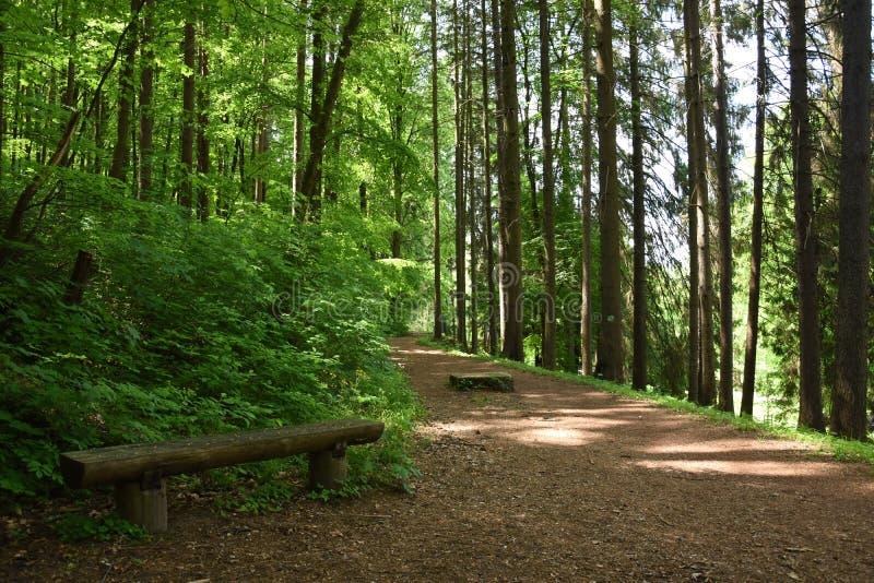Лес парка стоковая фотография rf