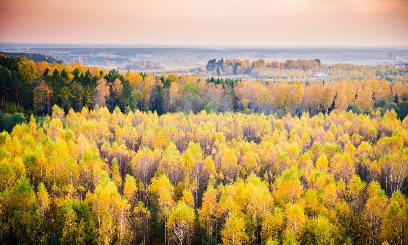 Лес падения стоковые фото