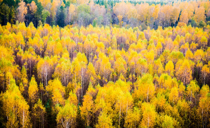 Лес падения стоковая фотография rf