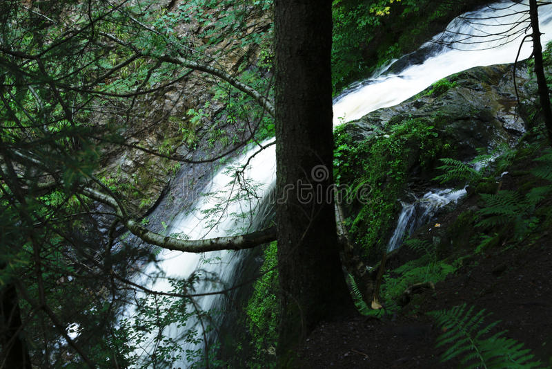 Лес похода водопада черный, Германия стоковые фотографии rf