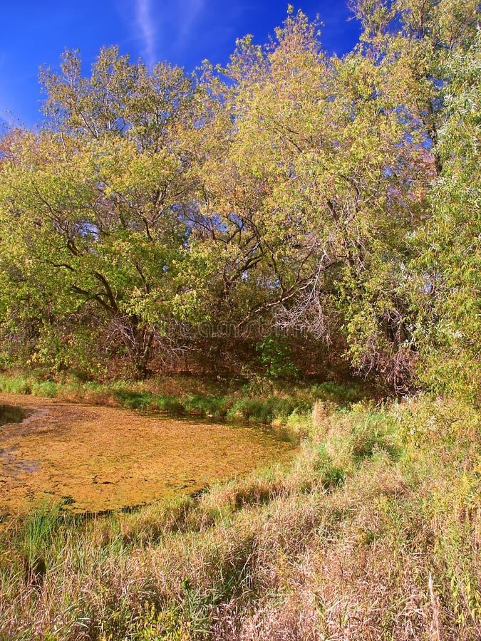 Лес положения морены чайника усадьбы Ла озера стоковая фотография rf