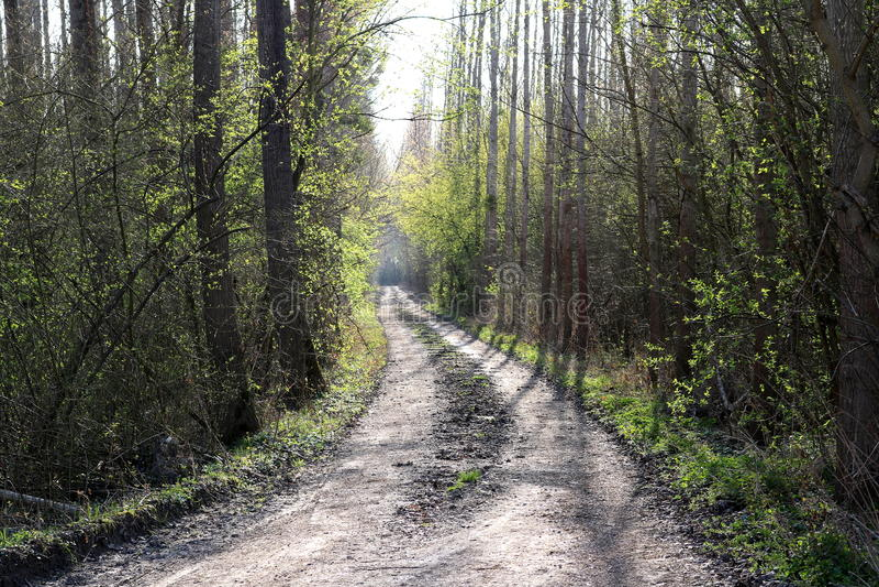 Лес - предыдущая весна стоковое фото rf