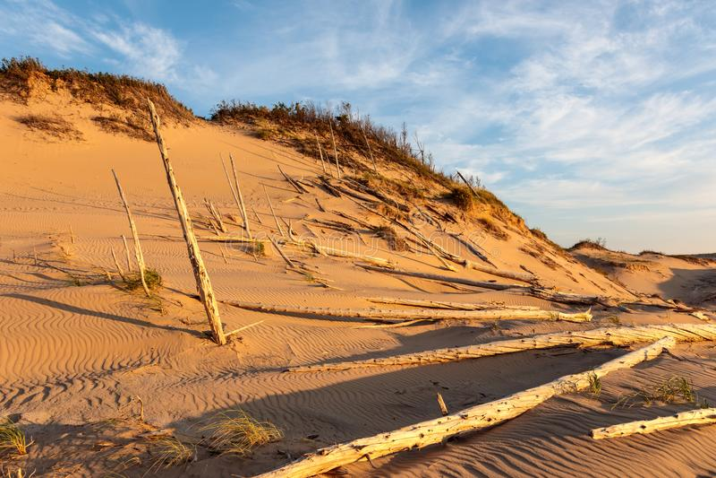 Лес призрака спать соотечественника дюн медведя Lakeshore стоковое изображение