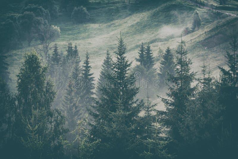 Лес прикарпатской горы после дождя стоковое фото rf