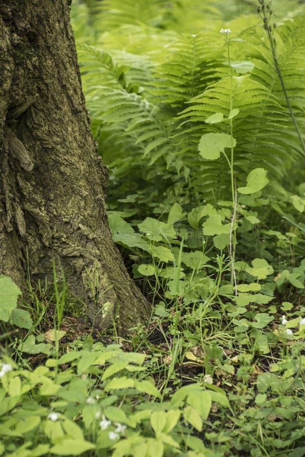 Лес природы, деталь папоротников, листья и дерево Перемещение в природе стоковое изображение