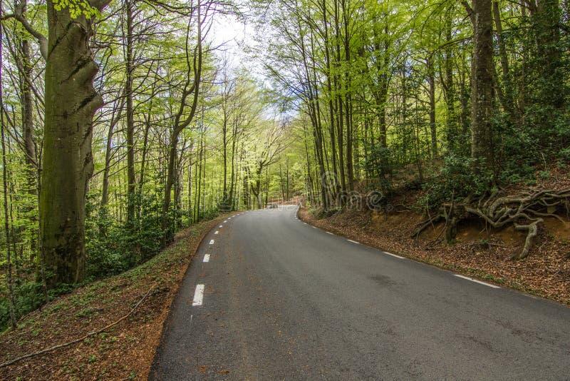 Лес природы зеленый стоковое фото