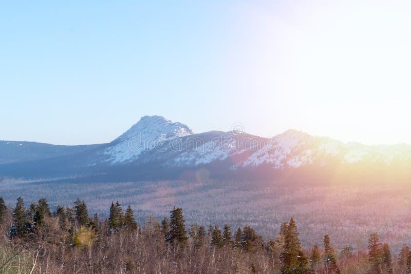 Лес против фона горных пиков, голубого безоблачного неба в лучах восходящего солнца стоковые фотографии rf