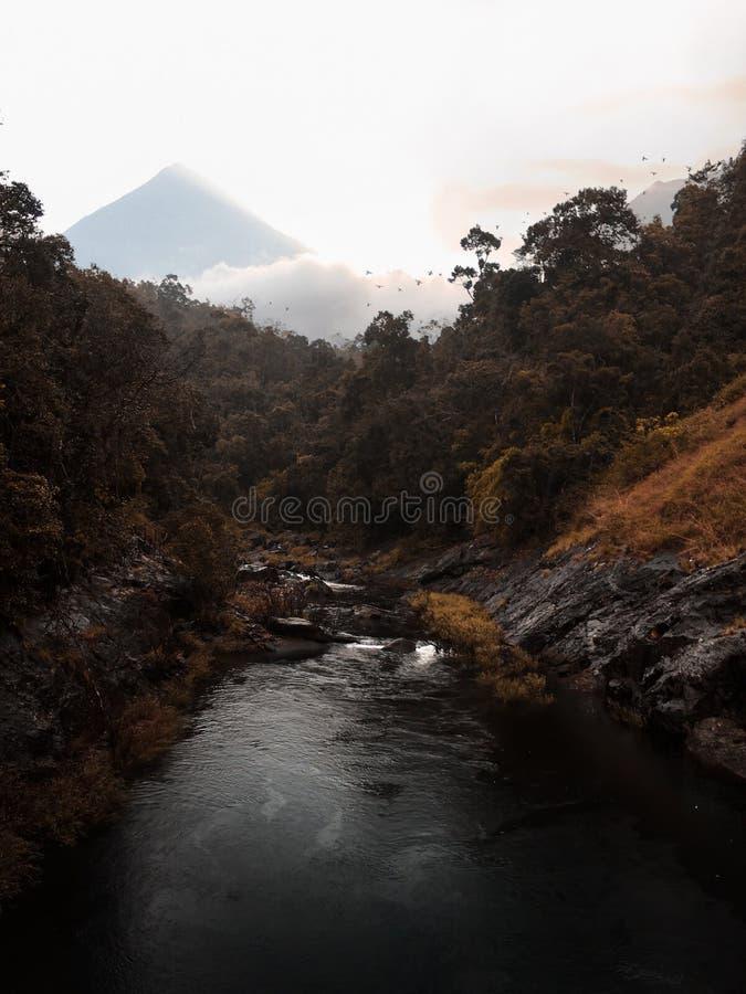 Лес реки осени стоковая фотография