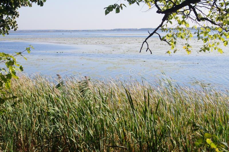 Лес, сентябрь, река, тростники и волны стоковые фото