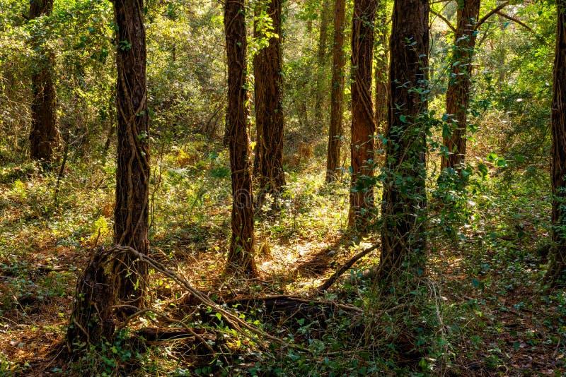 Лес сказки в солнечном дне стоковое изображение