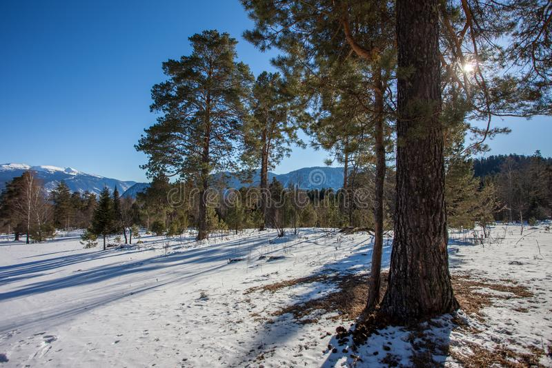 Лес снега стоковое фото rf