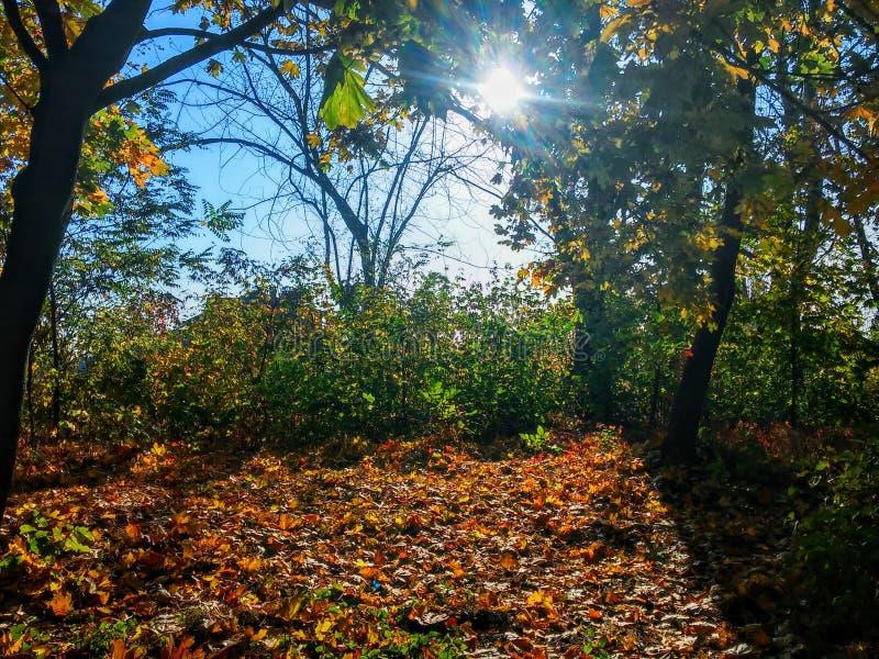 Лес солнце стоковые изображения rf