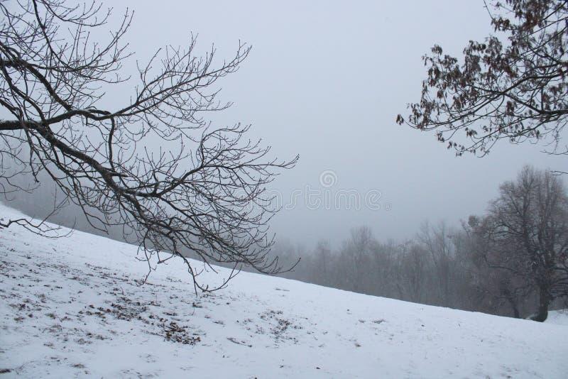 Лес со снегом в wintertime стоковое изображение