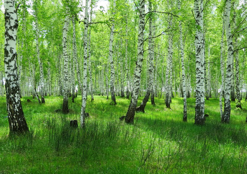 Лес-степи в лете стоковое изображение