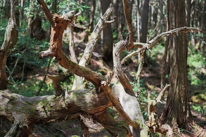 лес суицида стоковые изображения