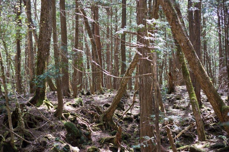 лес суицида стоковая фотография