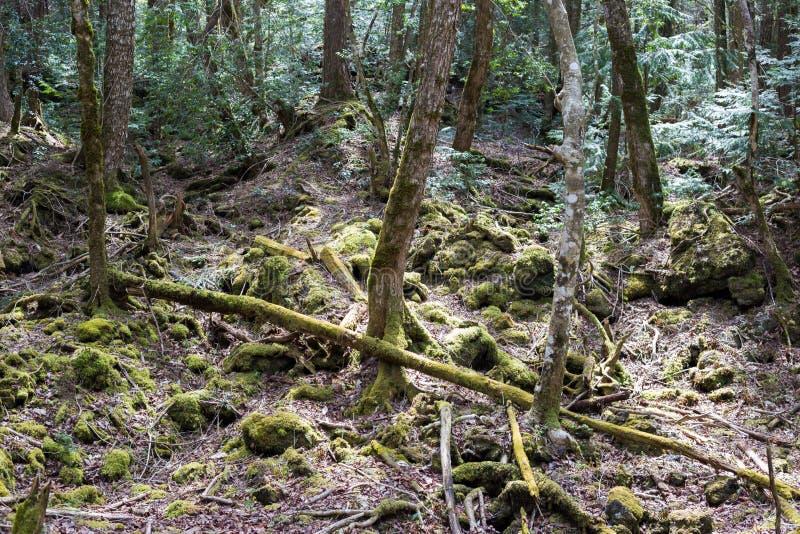 лес суицида стоковые фото