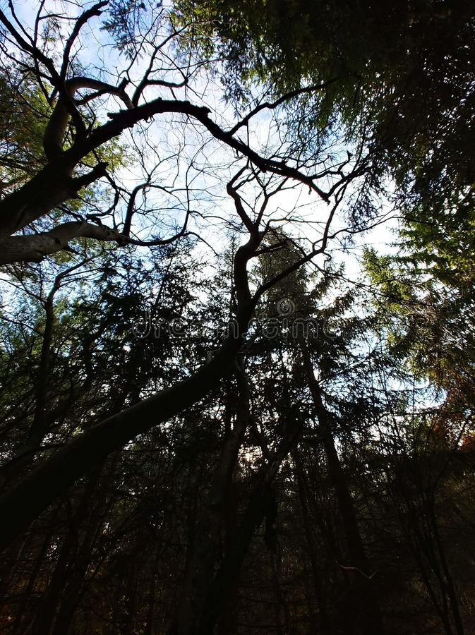 Лес суицида стоковое фото