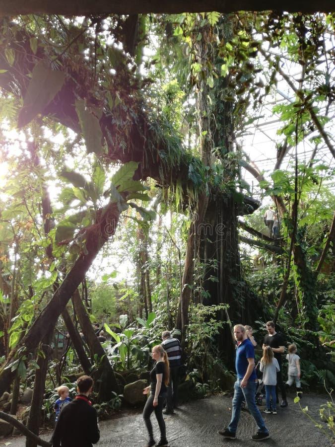 лес с людьми стоковые фотографии rf