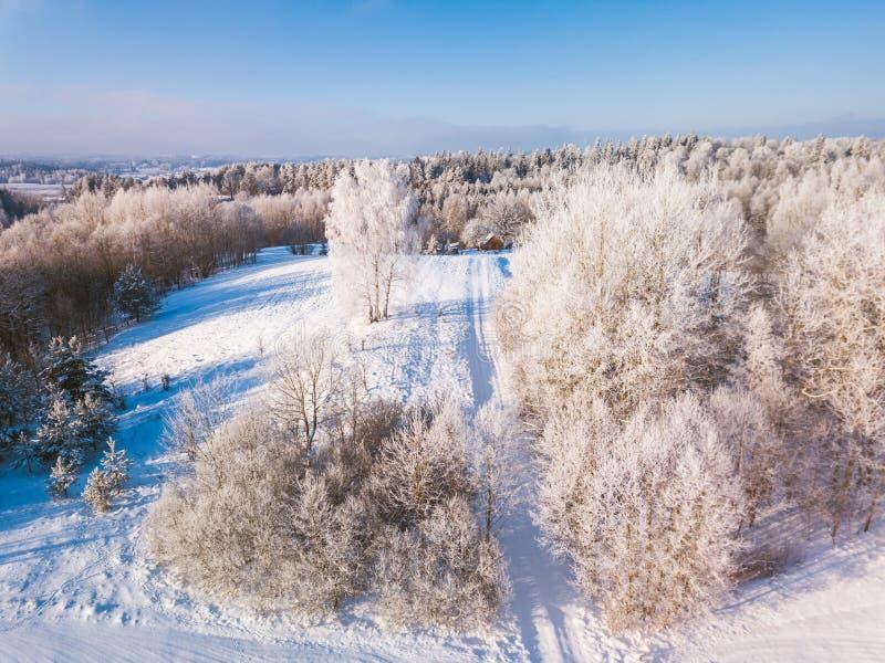 Лес с морозными деревьями, вид с воздуха зимы Литва стоковые фото