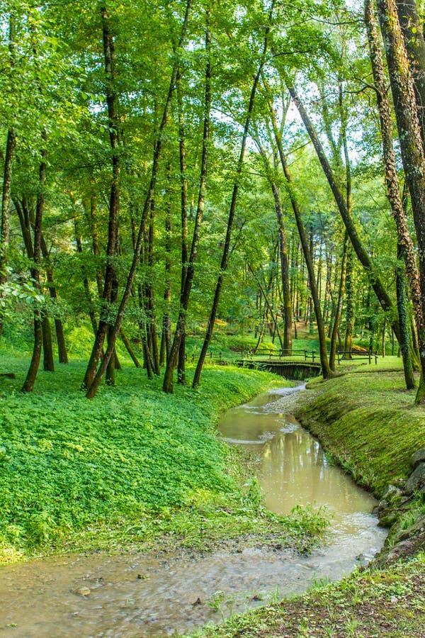 Лес с рекой на заходе солнца стоковое фото rf