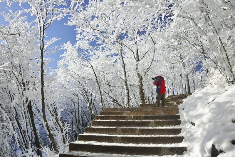 Лес с снегом стоковое изображение rf