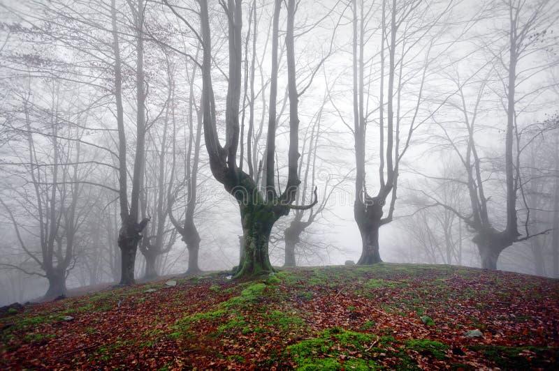 Лес с страшными деревьями стоковые изображения