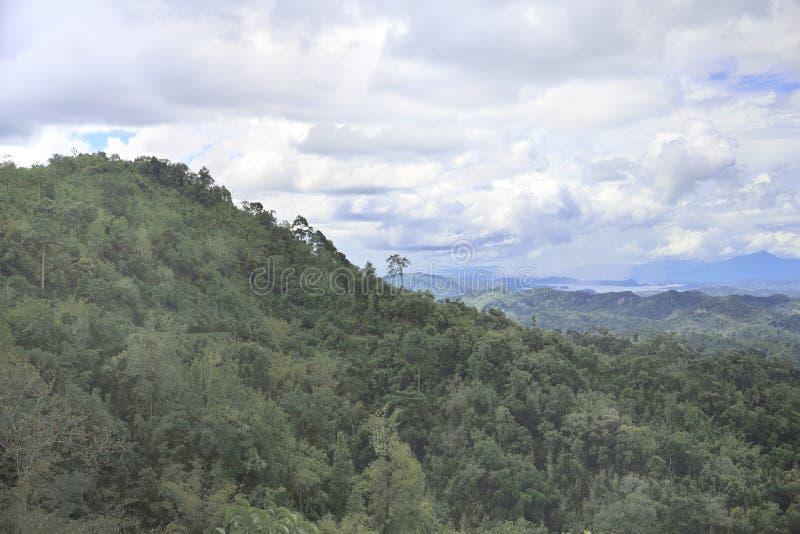 Лес Таиланда с взглядом ландшафта стоковые изображения