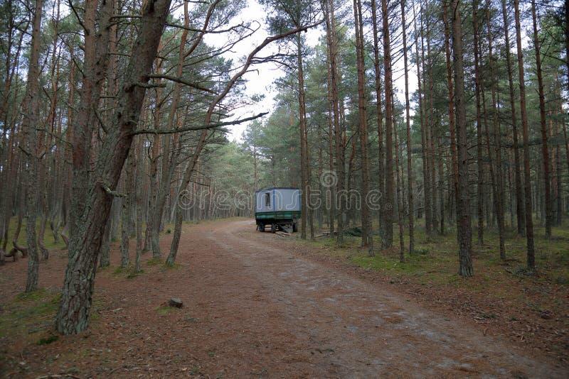 Лес танцев, вертел Curonian, Россия стоковое фото