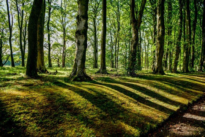 Лес, тени деревьев в заходе солнца стоковое фото