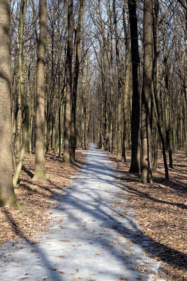 Лес тропы весной стоковое изображение rf