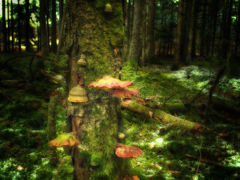 Лес тролля стоковое изображение rf