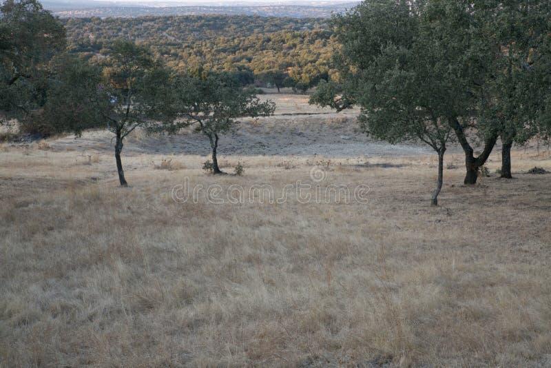 Лес дуба в лете стоковое изображение