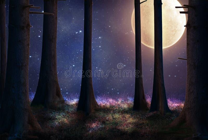 Лес фантазии на ноче стоковые изображения
